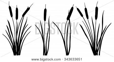 Vector Set Of Simple Silhouettes Of Bulrush Or Reed Or Cattail Or Typha Leaves In Black Isolated On