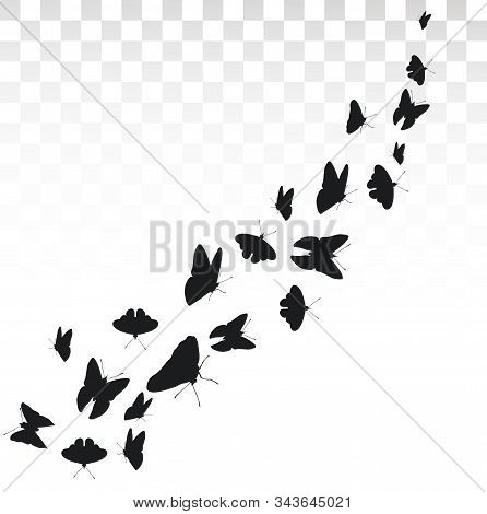 Flying Butterflies Isolated On Transparent Background.butterflies In Motion. Banner With Butterflies