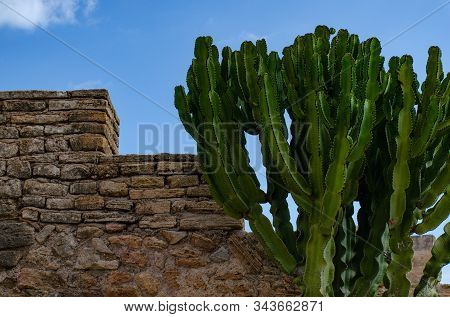 Enormous Cactus Next To A Stone Wall