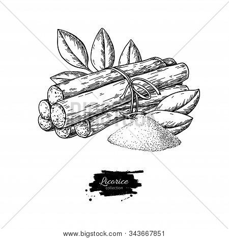 Licorice Root Bunch With Leaves. Vector Drawing. Botanical Illustration.