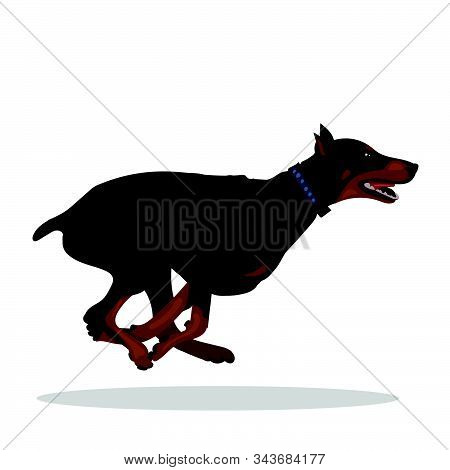 Dog Doberman Running Isolated At The With Background