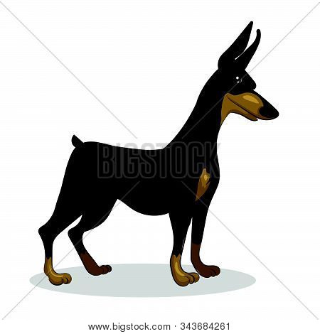 Dog Doberman Stand Isolated At The With Background