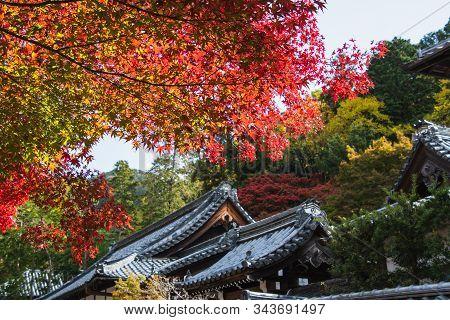 Tenju-an Temple  Adorned By Beautiful Fall Foliage.     Kyoto