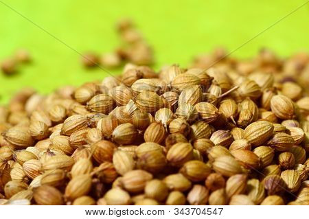 Coriander Seeds And Powdered Coriander On Green Background