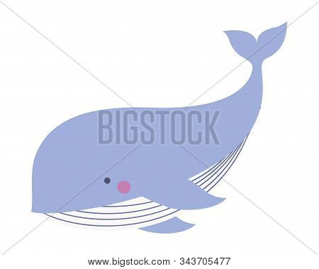 Cute Whale Cartoon Design, Animal Zoo Life Nature Character Childhood And Adorable Theme Vector Illu