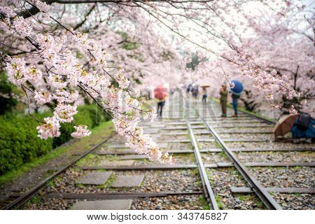 People Enjoy Spring Season At Keage Incline With Sakura (cherry Blossoms) In Kyoto, Japan. Japan Tou