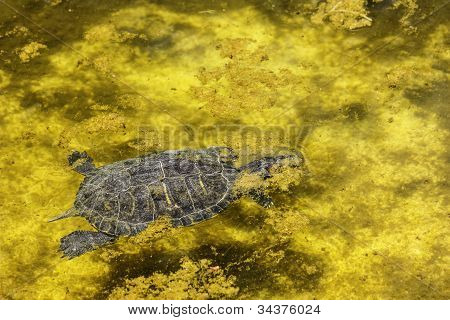 turtle in the water at the zoo