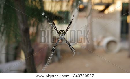 Spiders Are Air-breathing Arthropods That Have Eight Legs And Chelicerae With Fangs Able To Inject V