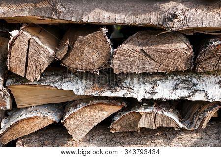 Old Wood Bark Texture