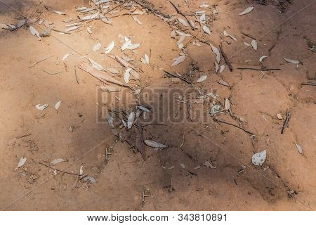 Texture Of Ferruginous Red Ferralsol Or Laterite Soil In Table Mountain National Park In Cape Town,