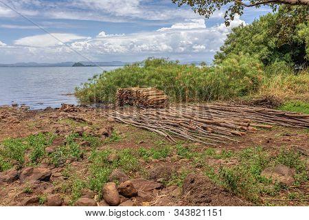 Wood Ready For Transport On Shore Of Lake Tana In Ethiopia, Zege Peninsula. Beautiful Landscape, Zeg