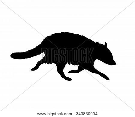 Vector Black Raccoon Silhouette Isolated On White Background