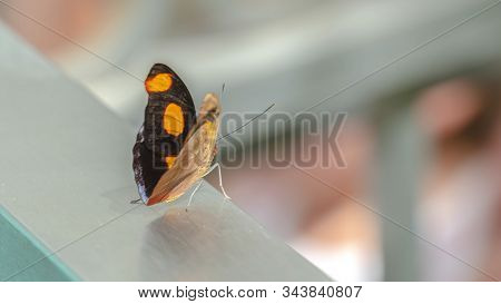 Pano Focus On A Small Beautiful Butterfly With Bright Yellow Spots On Its Black Wings