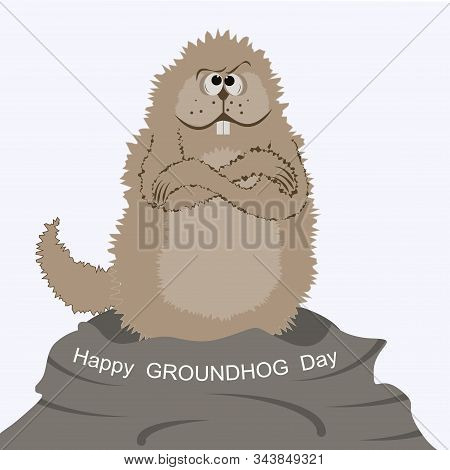Marmot Is Very Gloomy, Cold, Climbed Out Of The Hole - Isolated On White Background - Vector. Life O