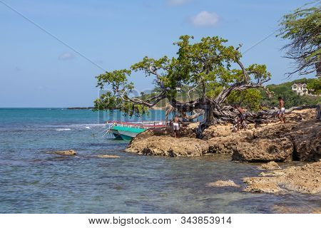 Treasure Beach, Jamaica - April 21 2012: Local Children Playing Near An Old Gnarled Tree On The Coas