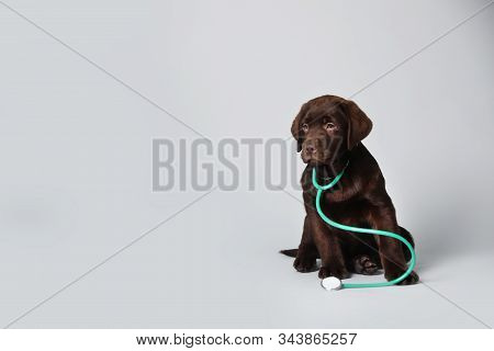 Cute Labrador Dog With Stethoscope As Veterinarian On Light Grey Background. Space For Text