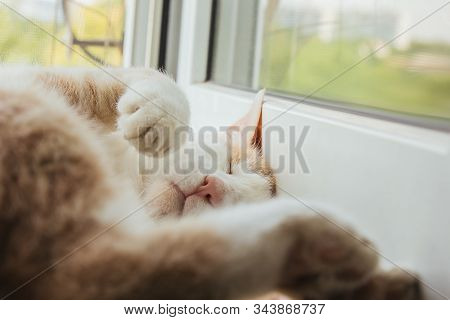 Cute Red Cat Sleeps At Home Near The Window In A Funny Pose. Relax, Relaxation, Rumbling. View From
