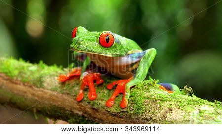 An Agalichnis Callidrian Frog Monkey Sits On A Branch Of A Tree Covered With Moss
