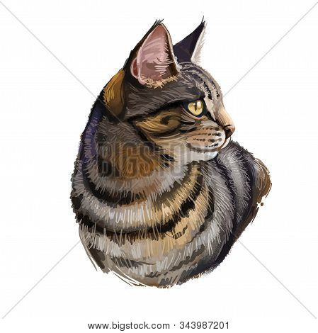 California Spangled Cat Isolated On White. Digital Art Illustration Of Hand Drawn Kitty For Web. Act