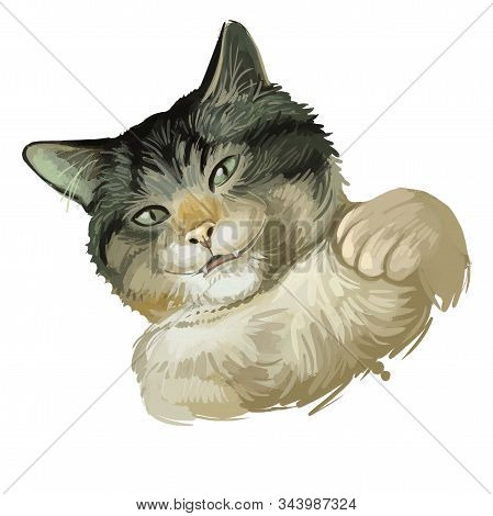 Dragon Li Or Chinese, China Li Hua Cat Isolated On White. Digital Art Illustration Of Hand Drawn Kit