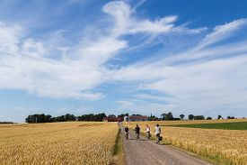 Ven, Sweden - August 06, 2015: Group Of Cyclist On The Countryside On The Swedish Island Ven.