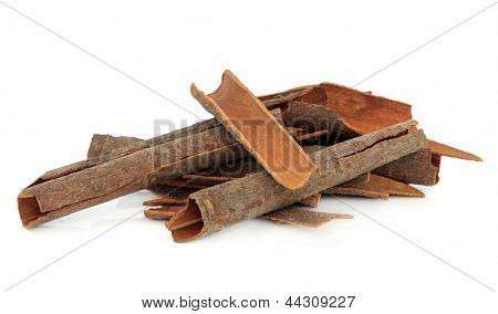 Cassia bark cinnamon spice over white background also used in chinese herbal medicine.
