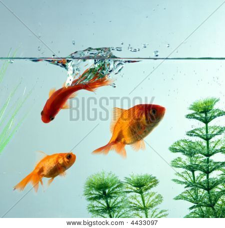 Fishes1