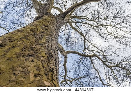 Tree Reaching For The Sky