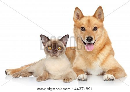 Happy dog and cat together on a white background poster