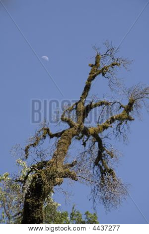 Tree In Castle Rock State Park