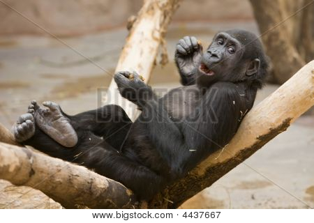 Monkey With Meal In Paws