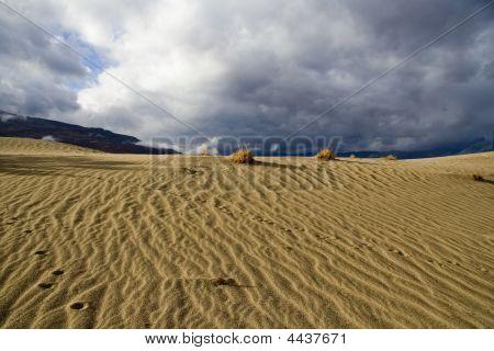 Desert Winter Storm