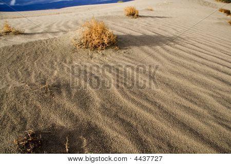Desert Winter
