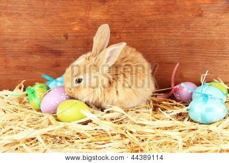 Fluffy foxy rabbit in a haystack with Easter eggs on wooden background poster