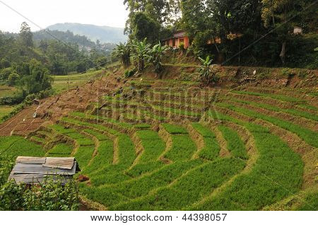 Terraced fields in Sri Lanka