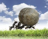 teamwork ,team of ants rolls stone uphill poster