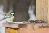 The titmouse flies up from a feeding trough. Winter, day. poster