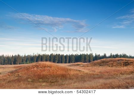 hills and forest in morning sunlight Drents-Friese wold Drenthe Friesland Netherlands poster