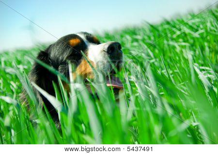 A Cute Dog In The Grass