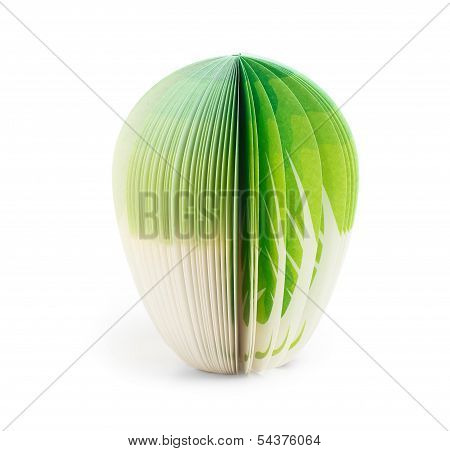 Paper Stick Note Green Cabbage Isolated