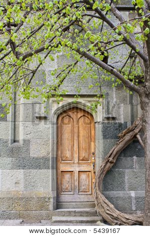 The Door And The Tree