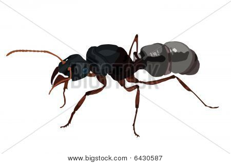 Little realistic black ant front of white background poster