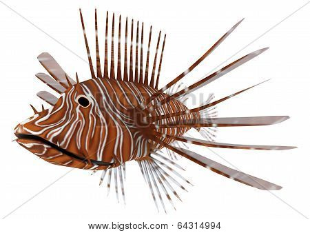Pterois Or Lionfish