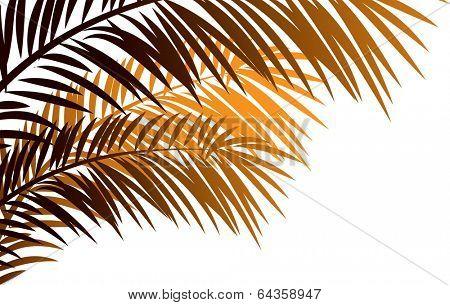 Vector illustration of needleleaf palm tree.