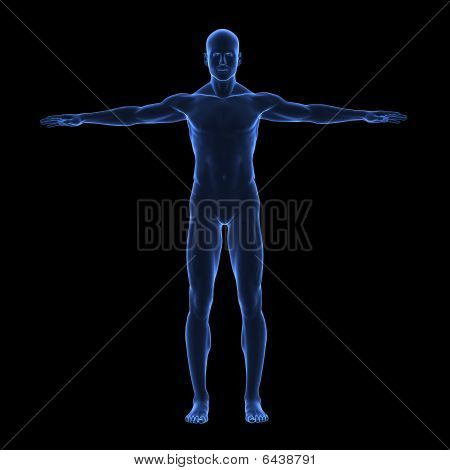 X Ray Human Body