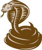 illustration of a king cobra coiled about to strike poster