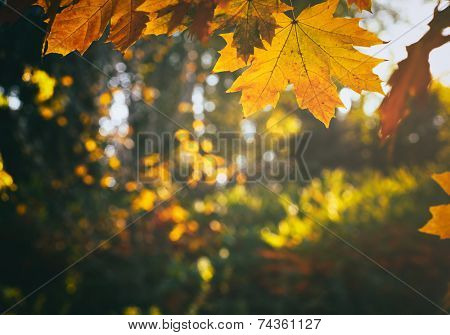 Autumn leaves in beautiful fall park
