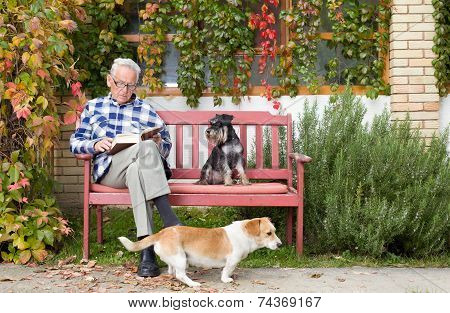 Senior Man With Book And Dogs