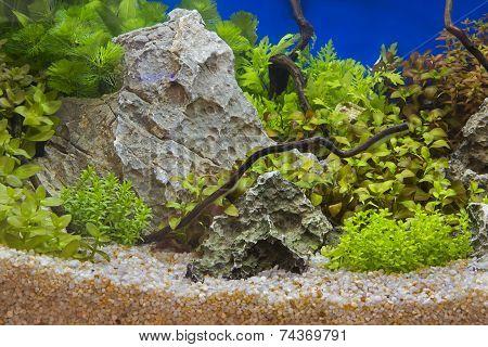Aquatic Plants In Tropical
