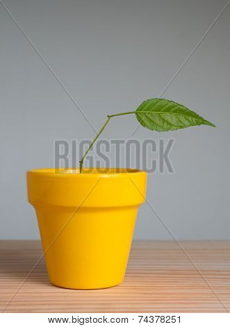 Plant With One Leaf